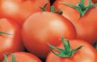 Сорт томата: Мамуля f1