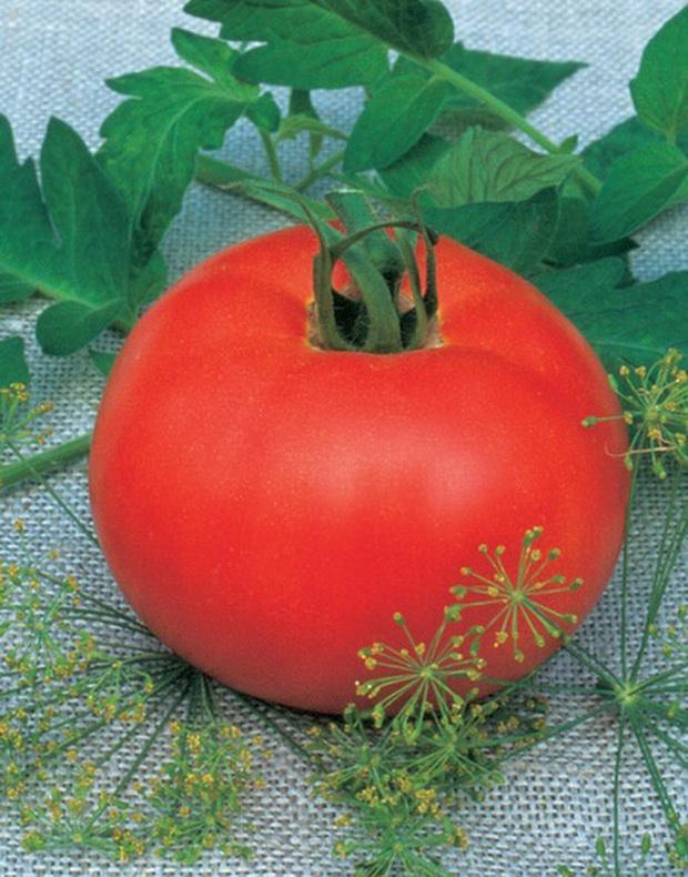 Сорт томата: Манечка   f1
