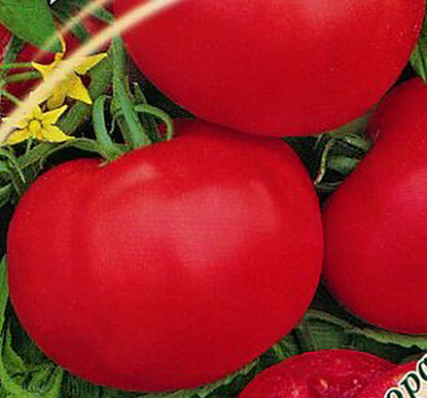 Сорт томата: Маргарита   f1