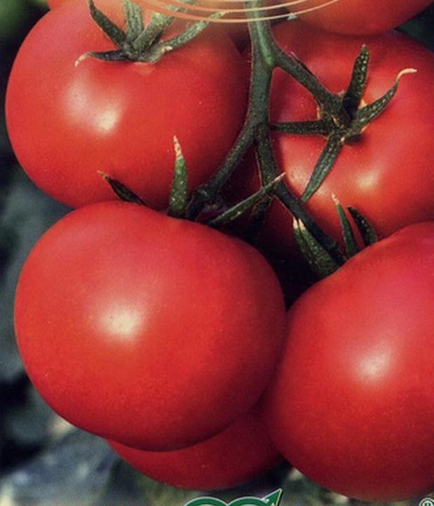 Сорт томата: Мариша