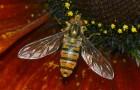 Мармеладная муха