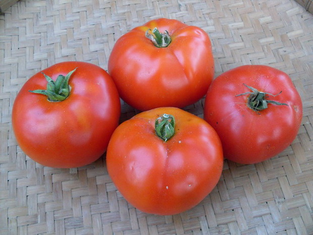 Сорт томата: Марсианка