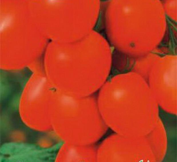 Сорт томата: Маруся