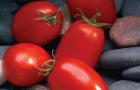 Сорт томата: Марьяна