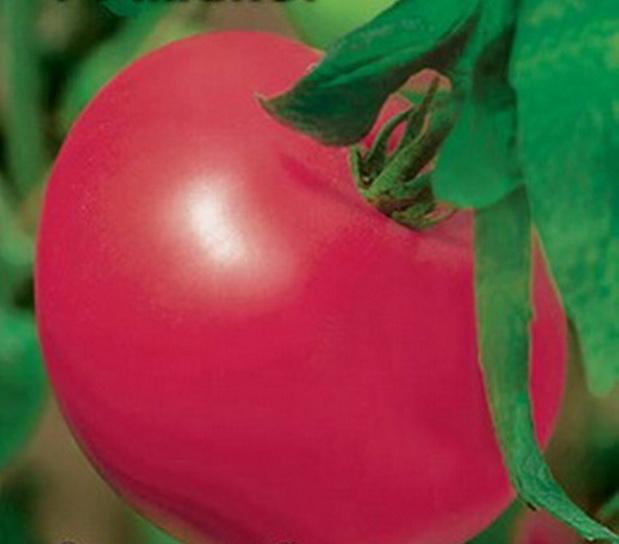 Сорт томата: Мажор   f1