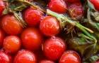 Сорт томата: Мэри f1