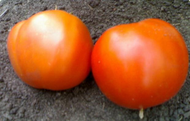 Сорт томата: Мечта любителя