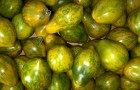 Сорт томата: Михаэла f1