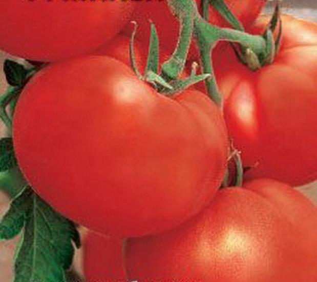 Сорт томата: Михей   f1