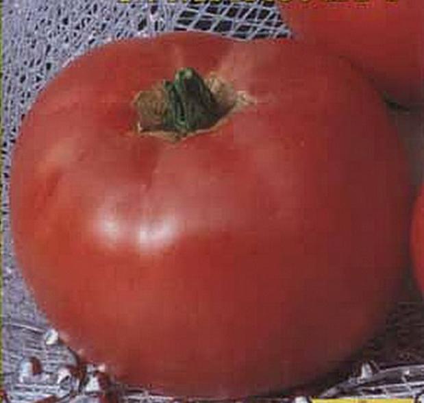 Сорт томата: Микулич   f1