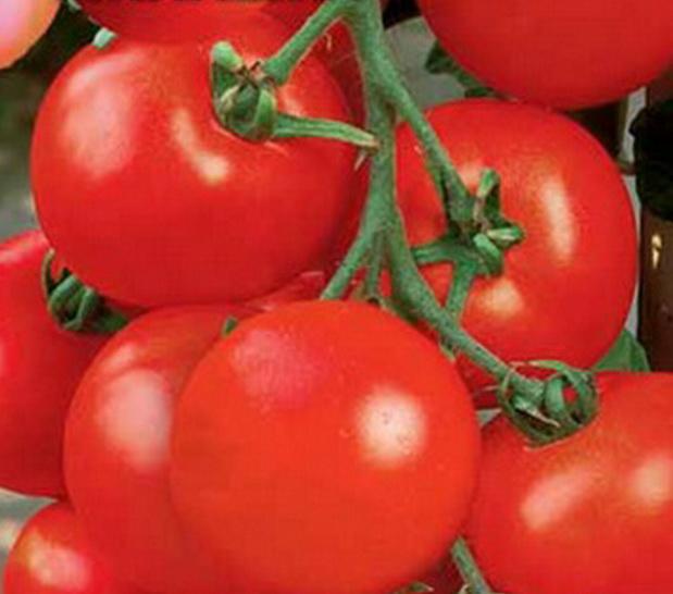Сорт томата: Милашка