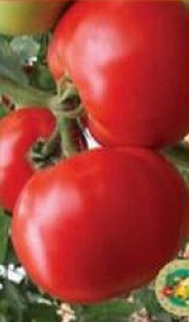 Сорт томата: Мирсини   f1