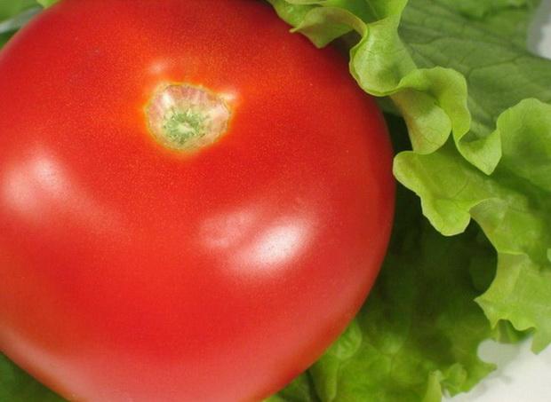 Сорт томата: Мохнатый шмель