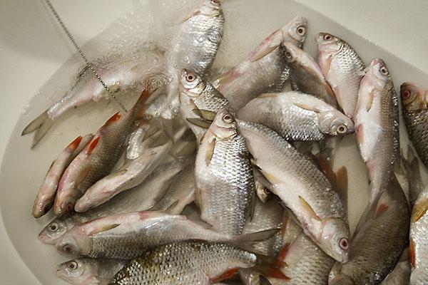 Мокрый посол свежей рыбы