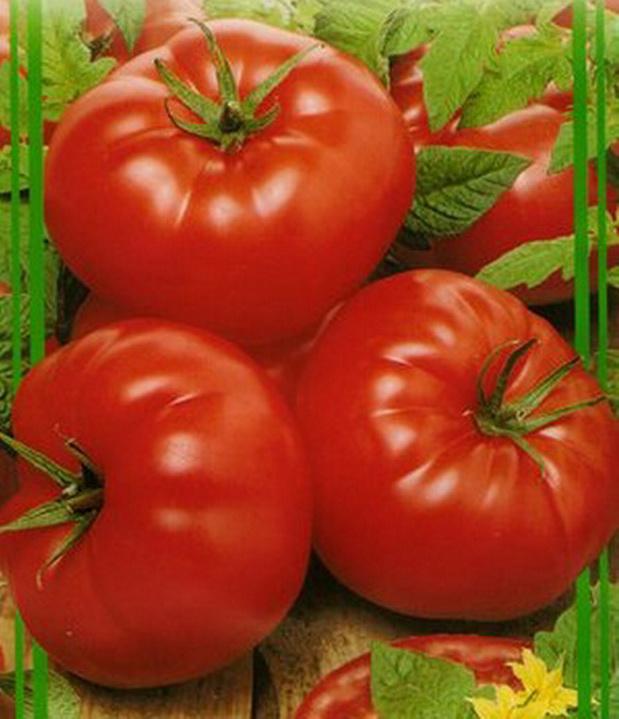 Сорт томата: Монро   f1