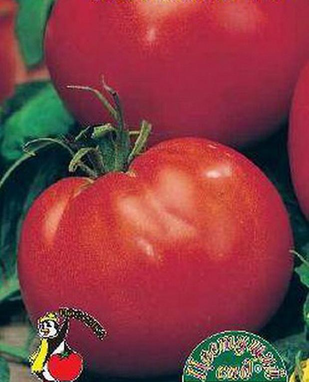 Сорт томата: Морозко   f1