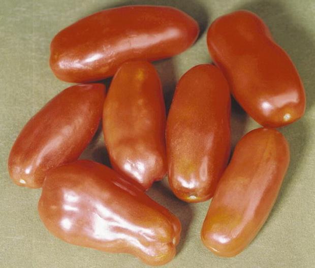 Сорт томата: Мосино   f1