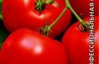 Сорт томата: Муженек f1