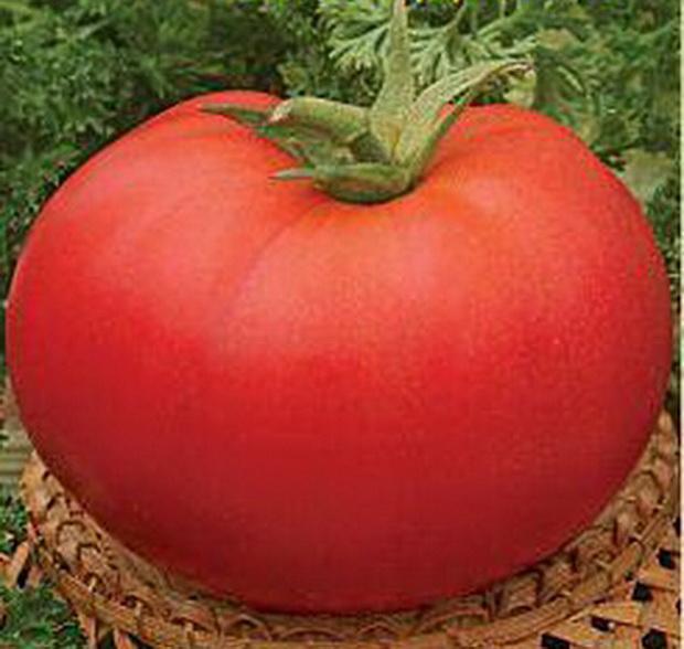 Сорт томата: Награда