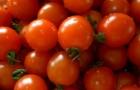 Сорт томата: Натс f1
