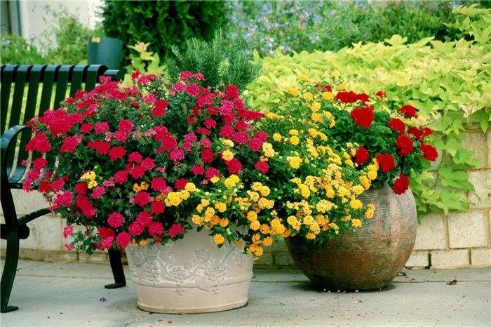 Нетрадиционные способы выращивания растений