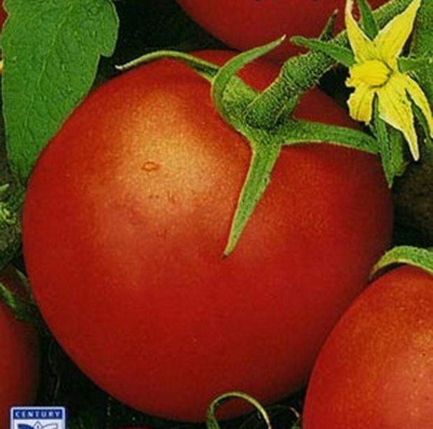 Сорт томата: Невский проспект