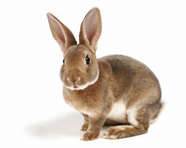 Незаразные болезни кроликов – Конъюнктивит