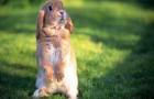 Незаразные болезни кроликов – Витамин D
