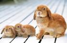 Незаразные болезни кроликов – Витамин Е