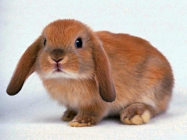 Незаразные болезни кроликов – Витамин С