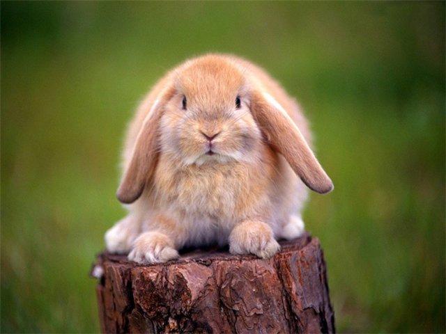 Незаразные болезни кроликов – Витамин В6