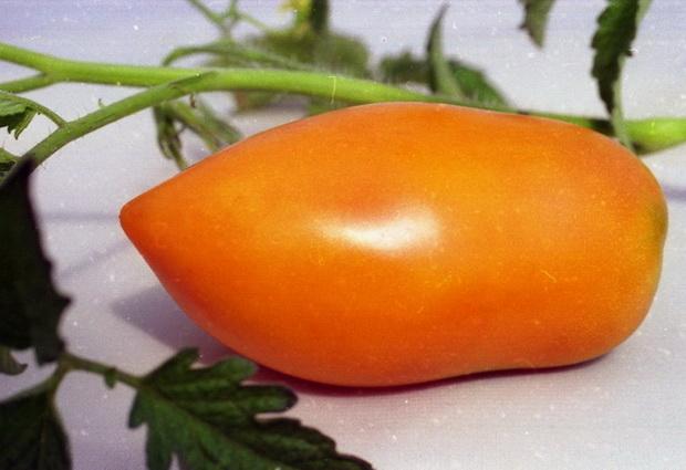 Сорт томата: Нежность