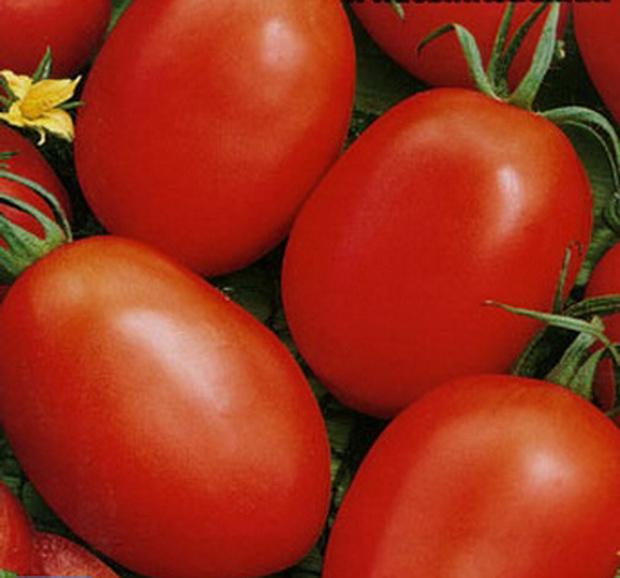 Сорт томата: Новичок
