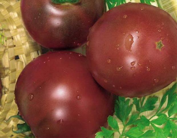 Сорт томата: Новый принц
