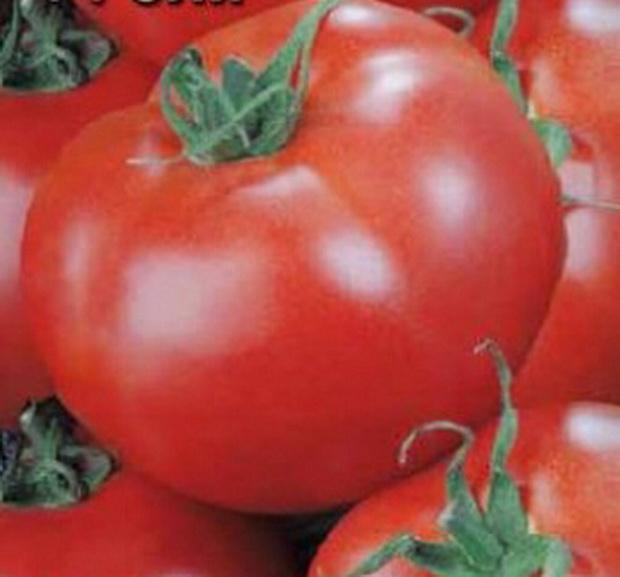 Сорт томата: Оля   f1