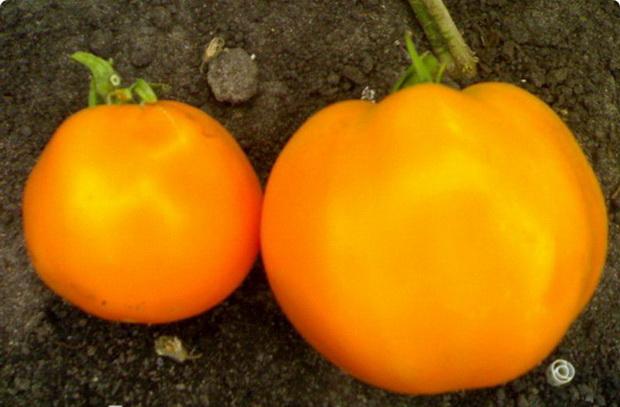 Сорт томата: Оранжевое сердце