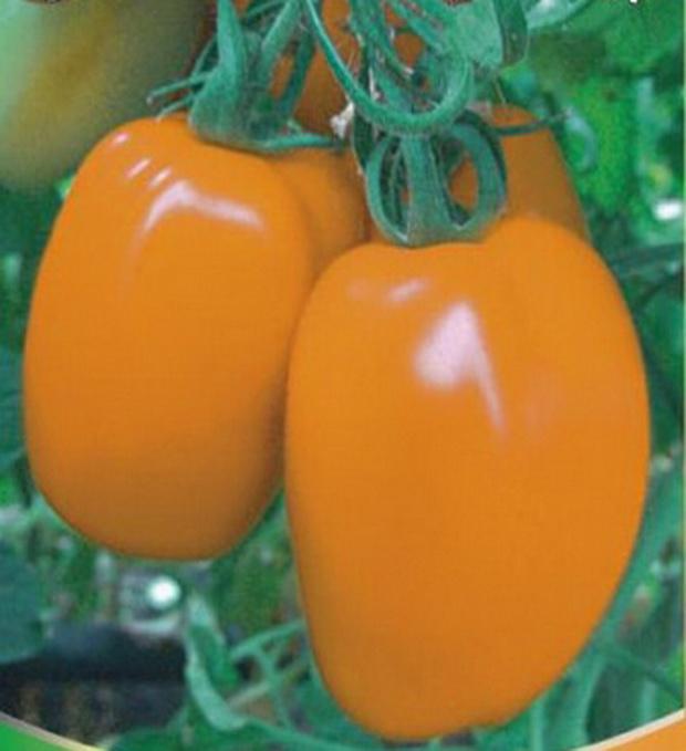 Сорт томата: Оранжевый авюри