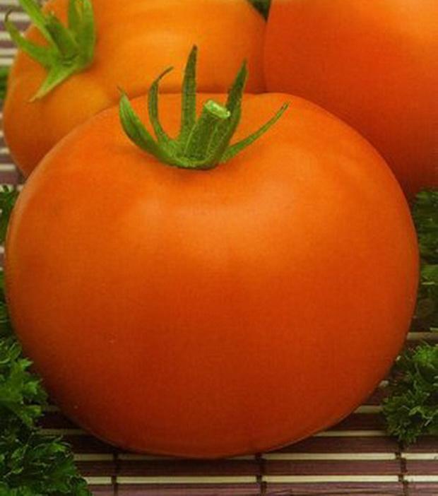 Сорт томата: Оранжевый бой   f1