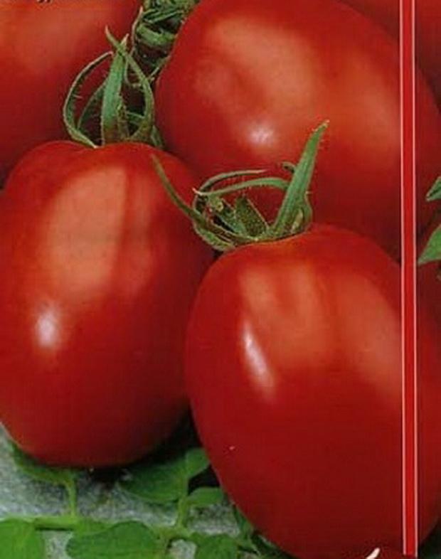 Сорт томата: Отличник   f1