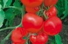 Сорт томата: Пагода