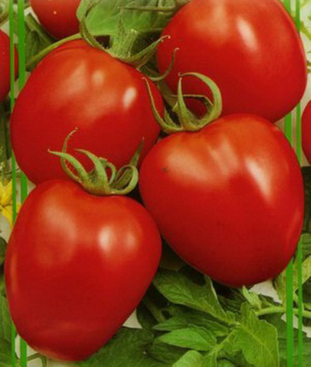 Сорт томата: Паленка   f1