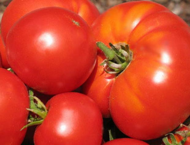 Сорт томата: Памятный