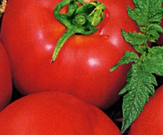 Сорт томата: Паруч   f1