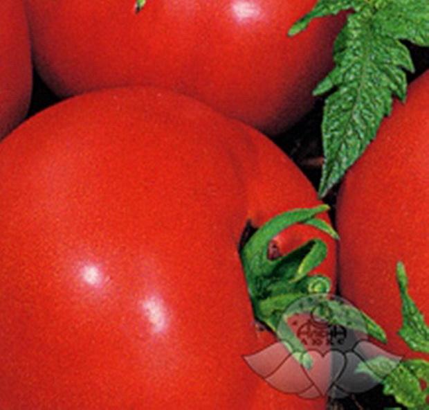 Сорт томата: Парус   f1
