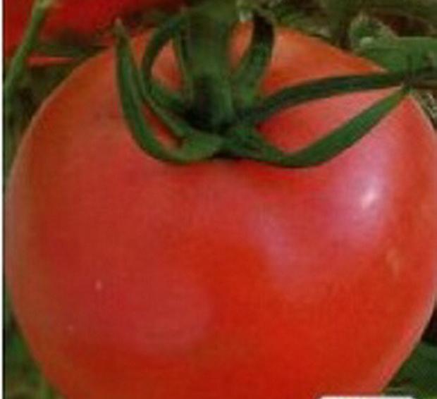Сорт томата: Патриот   f1