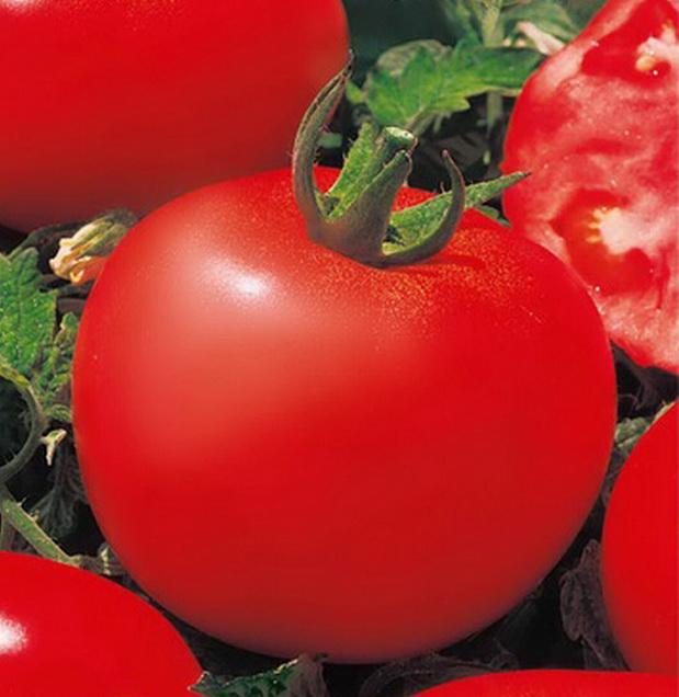 Сорт томата: Патрис