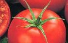 Сорт томата: Педро f1