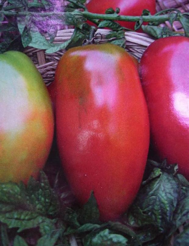 Сорт томата: Перцевидный гигант