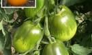 Сорт томата: Перцевидный оранжевый