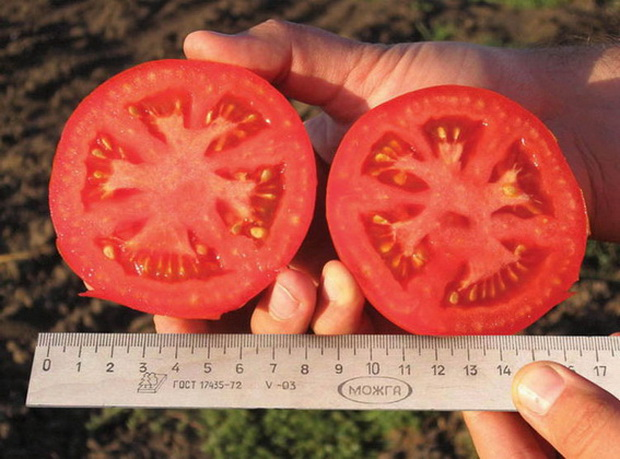 Сорт томата: Пиетро   f1
